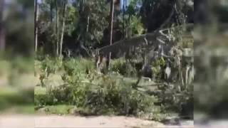 Damage from Hurricane Matthew seen on Hilton Head Island