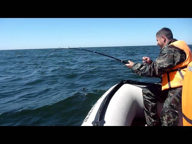 как ловить треску в белом море видео