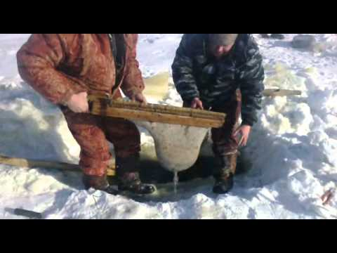 как добыть мотыля для рыбалки видео