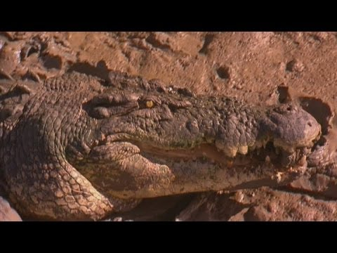 Crocodile attack: Australian police search for missing boy