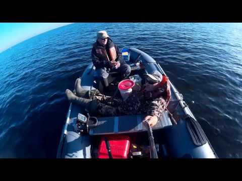 лодка групер 380 видео
