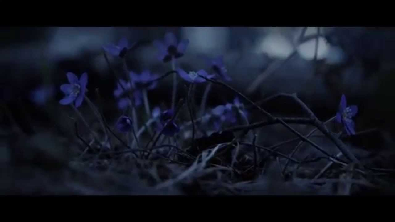 To/Die/For - In Black (Official Music Video)