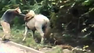 Borracho quiere subir a Caballo - Envialo