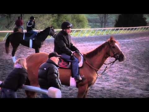 it's my job: The Exercise Rider (ep1)