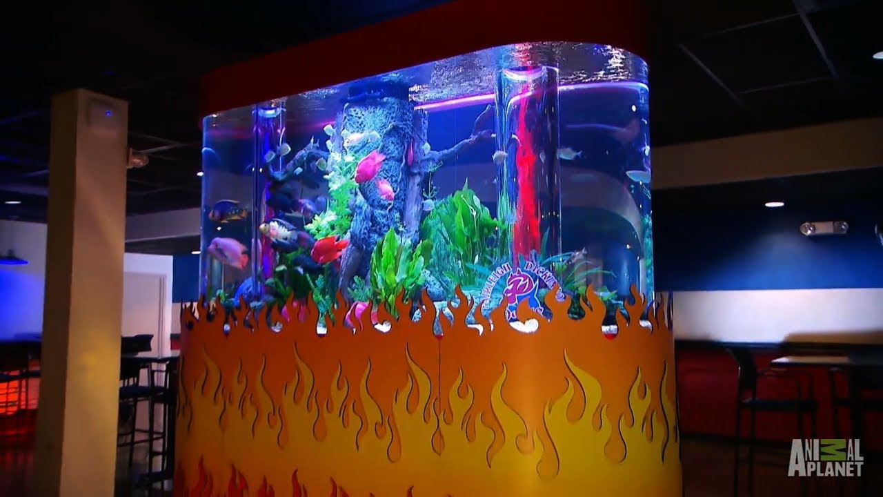 Reveal flame tank tanked youtube for Fish tank show