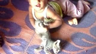 Naughty baby boy play with baby cat