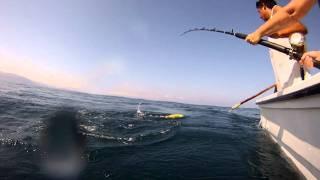 Gayle lands a Dorado in Banderas Bay