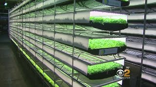 Seen At 11: Vertical Farming