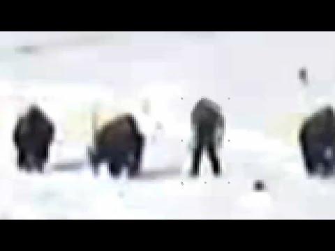Bigfoot vs Buffalo (ThinkerThunker)