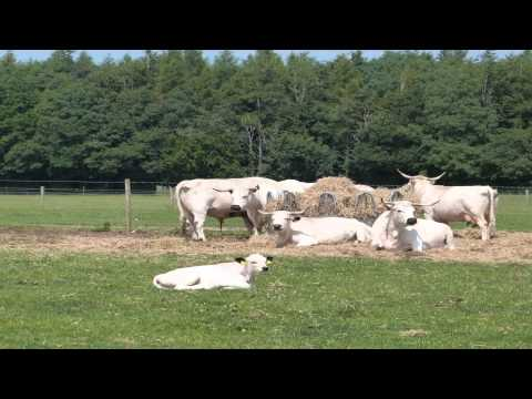 Cotswold farm park Ealing London