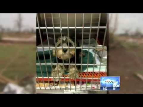 rescuing dogs after texas tornado 05/15/2013