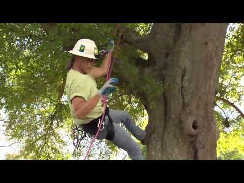 Central Florida Gardening - Large Tree Care