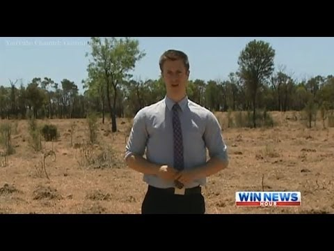 Qld Drought Coverage: CQ Cattle Graziers Battle Dry Conditions - WIN News Rockhampton (2013)