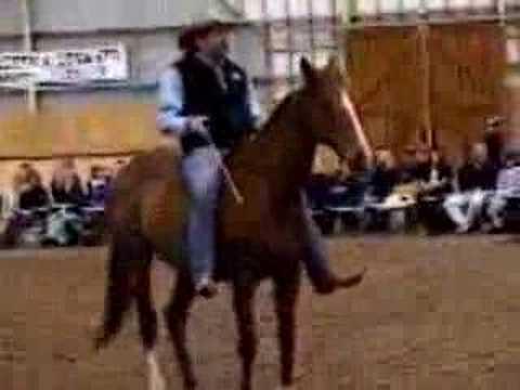 parelli horse training 1