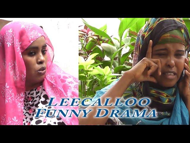 Best Afaan Oromoo Drama😅😅Leecalloo😅😅 kutaa 1 thumbnail