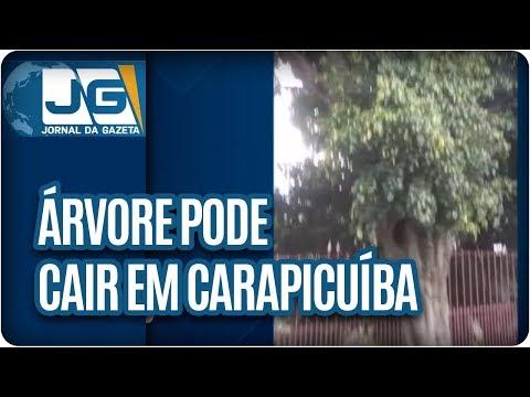 Risco de queda de árvore em Carapicuíba preocupa moradores