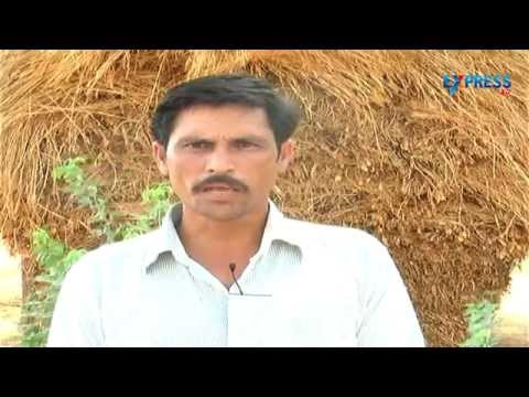 Success story on low budget farming - Paadi Pantalu