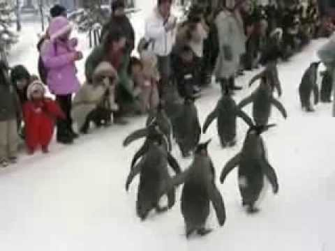 ペンギン大行進