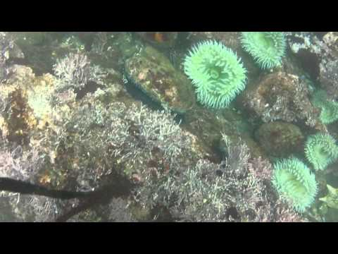 Vandamme State Park - Abalone Diving