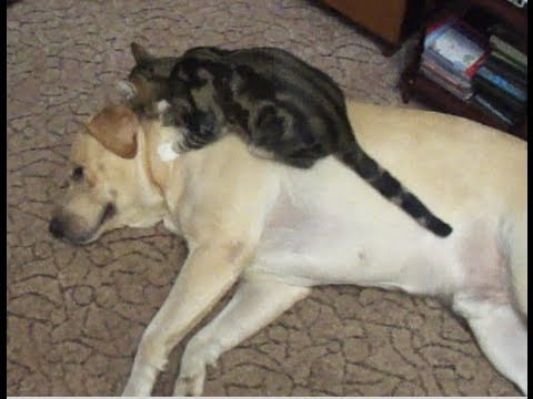 Cheezburger : Kitten and Doggie Love