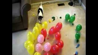 DOG vs. BALLOONS V, SPIRAL OF DEATH