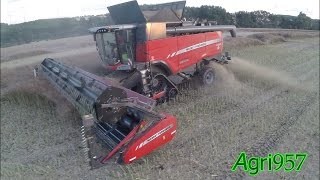 XL RAPESEED HARVEST 100% Massey Ferguson: 2x NEW 9380 DELTA on Tracks and 8690 + HAWE | DE TOUR