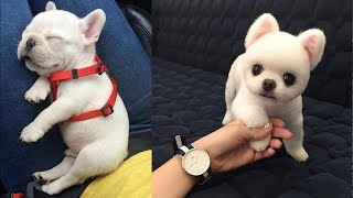 Baby Dogs - Cute and Funny Dog Videos Compilation #6 | Aww Animals