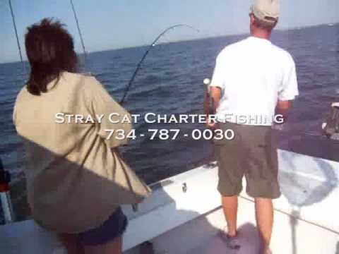 Lake erie walleye fishing charters michigan youtube for Michigan out of state fishing license