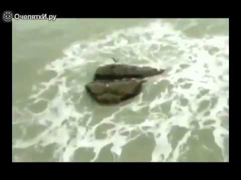 Случайно встретили русалку