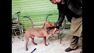 Funny videos 2019 funny vines try not to laugh challenge // Funny Dog Training