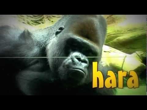 Прикольные обезьяны (Хару Мамбуру)
