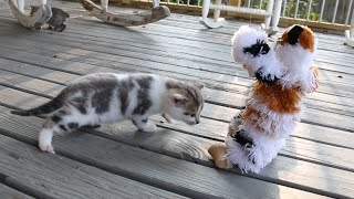 Kittens playing with kitten puppets