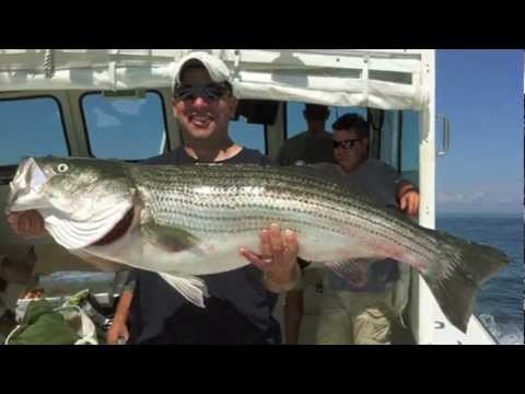 Striped Bass Fishing Summer 2011