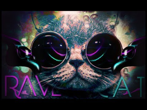 rave cat alley   youtube