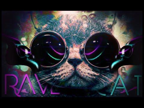 Vines Funny Cat Videos