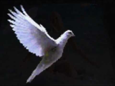 paloma blanca CONJUNTO COSTA MAR.