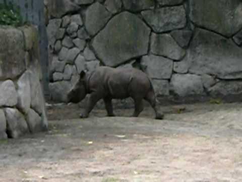 上野動物園 サイの赤ちゃん20090614