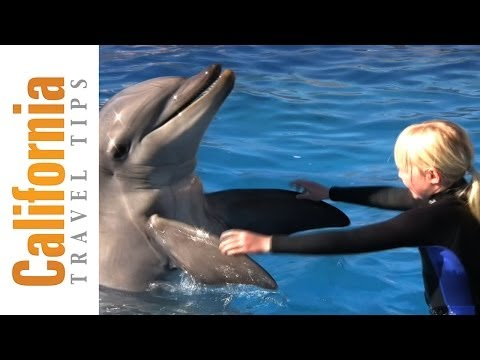 Swim with Dolphins Video