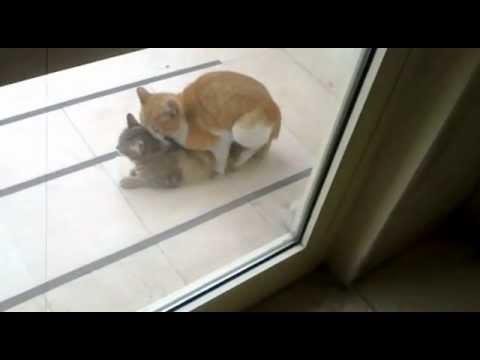 Cat Porn Anal ( Kedi Sikişi ) Asdfsdfhklhlk video