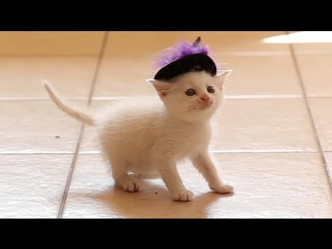 Cute Kittens Wearing Hats Kittens Wearing Witch Hats