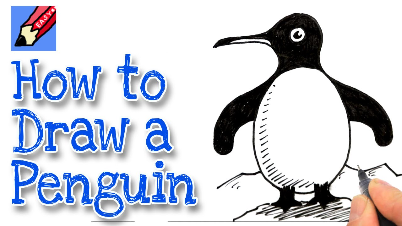 how to draw a baby girl penguin