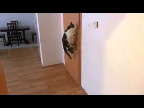 Cat opens five doors EPIC!!