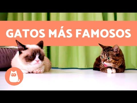 Los 10 gatos más famosos de Internet