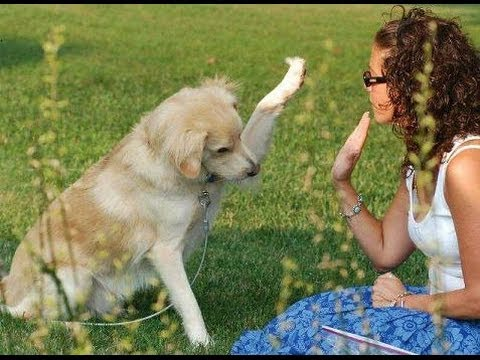 How To Train Your Dog - Dog Training Tips For Obedience Training Video video