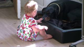 Dangerous Doberman And a Cute Baby | Funny Videos 2015