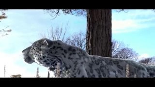 Snow Leopard - Making Of