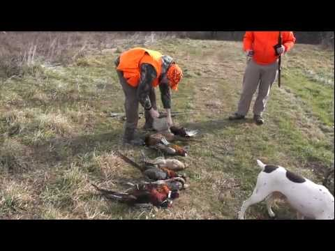Pheasant City Dogs For Sale In Wisconsin