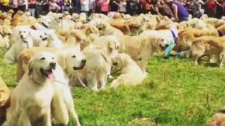 Fox News   More than 300 dogs gathered with their owners