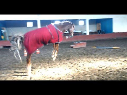 Тихий денек с громкой лошадью :D