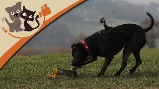 Gassigehen mit dem Hund leicht gemacht